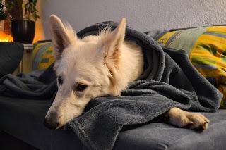 DSC_0051-12-1 %Hundeblog