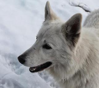 Aico2-1 %Hundeblog