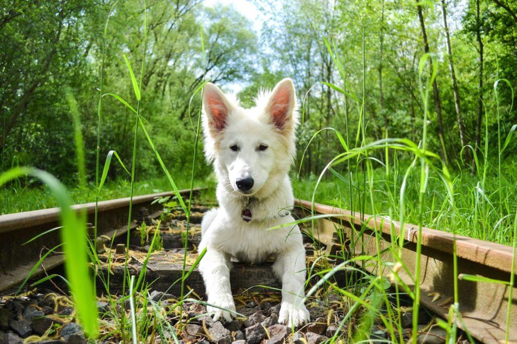 DSC_0078-5-1-1024x682 %Hundeblog