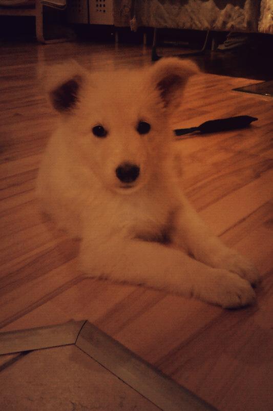 Foto-17-1 %Hundeblog