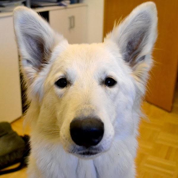 DSC_0132-1 %Hundeblog