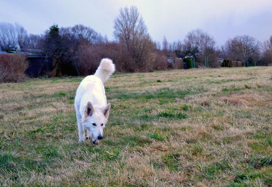 DSC_0147-1 %Hundeblog