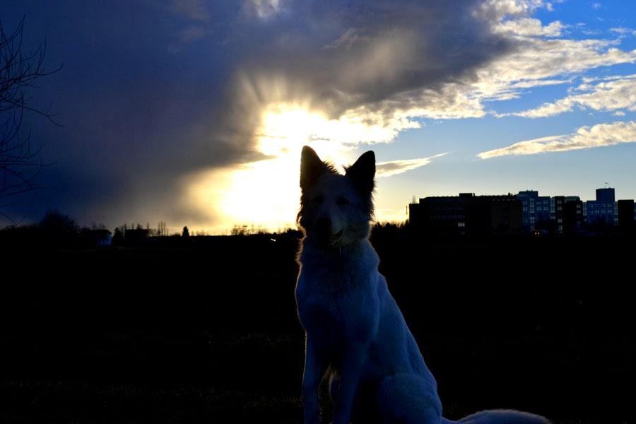 DSC_0188-1 %Hundeblog