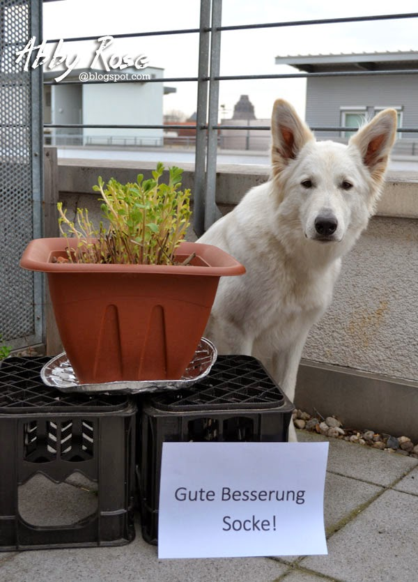 DSC_0012-1 %Hundeblog