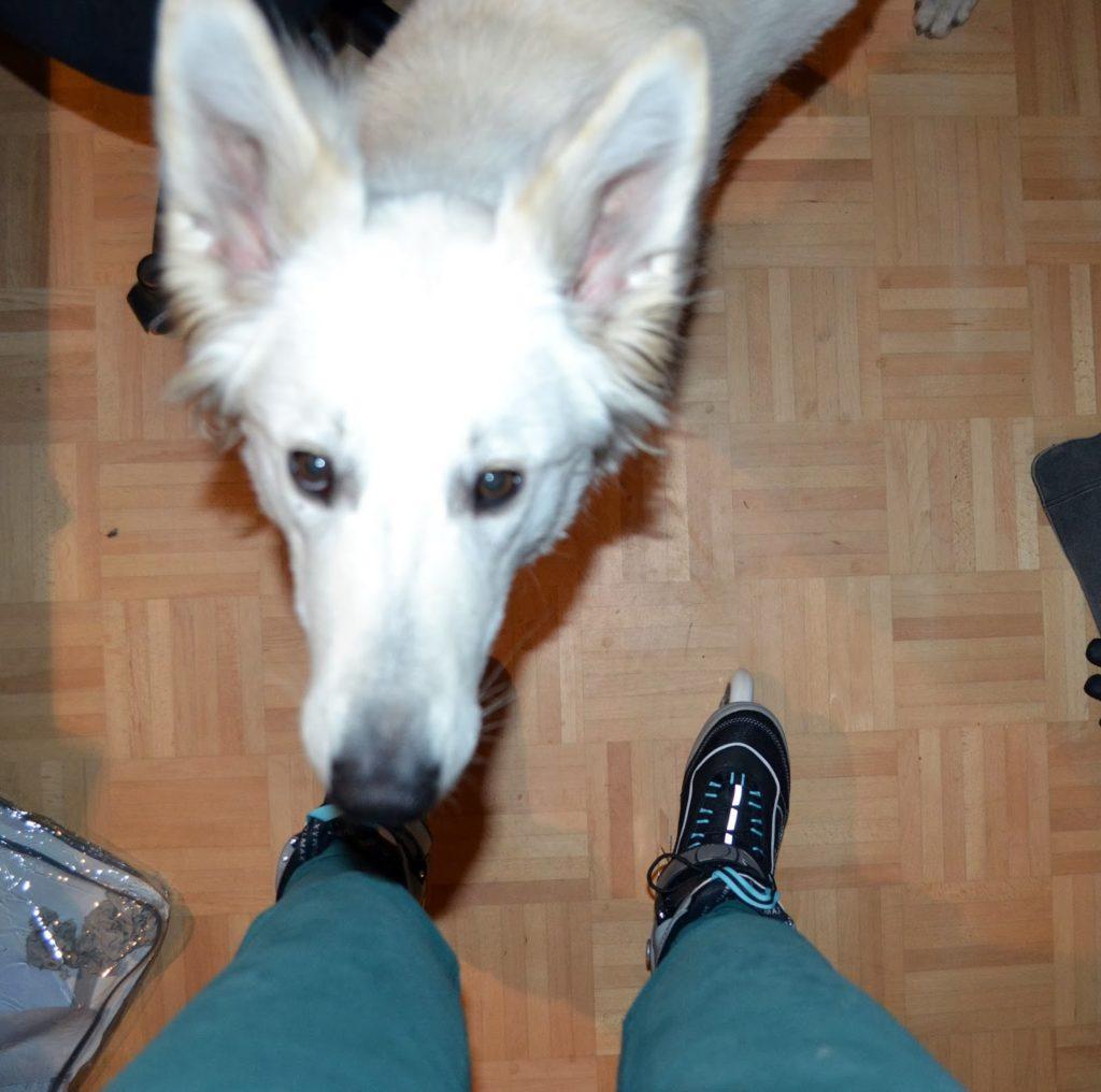 DSC_0511-1-1024x1016 %Hundeblog