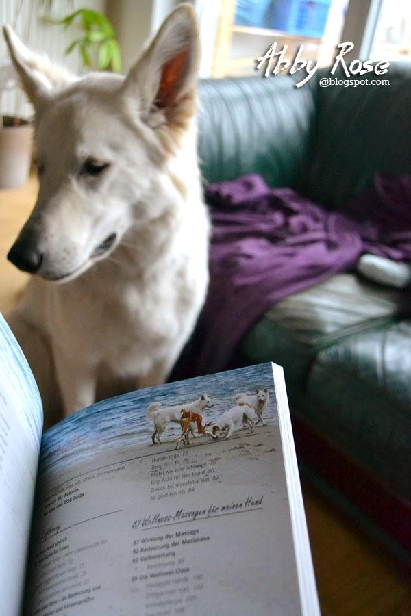 dog_relax3-1 %Hundeblog