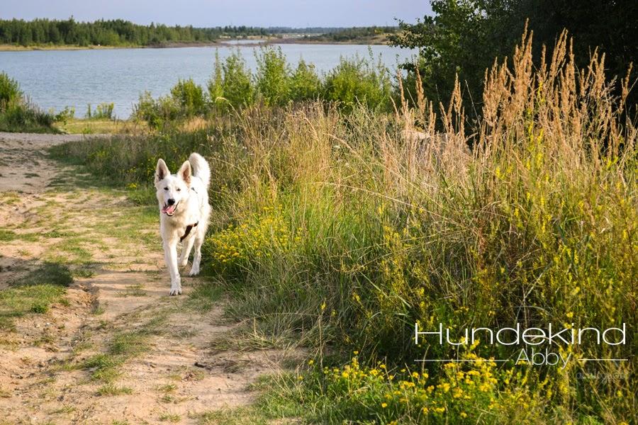 DSC_0350-1 %Hundeblog