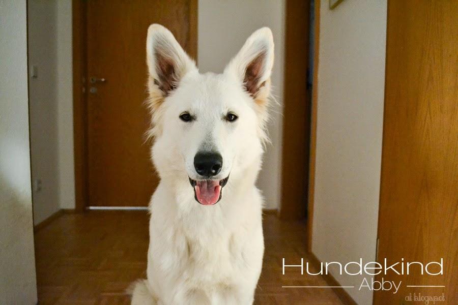 DSC_0556-1 %Hundeblog