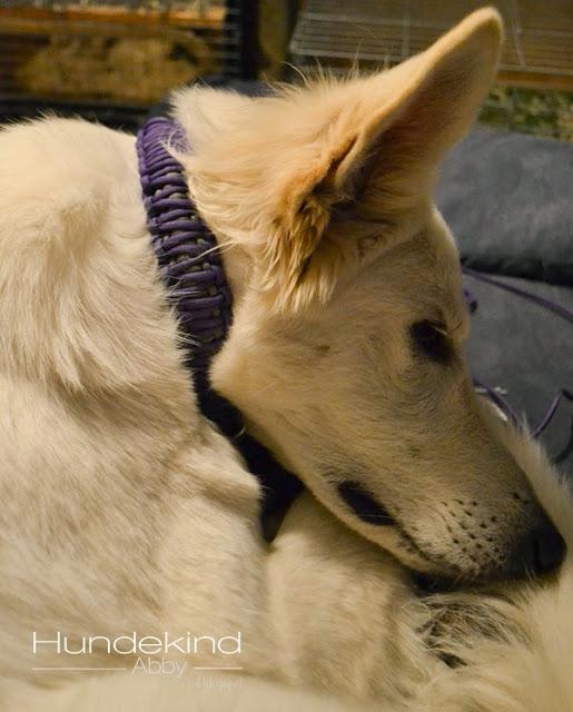 DSC_0587-1 %Hundeblog