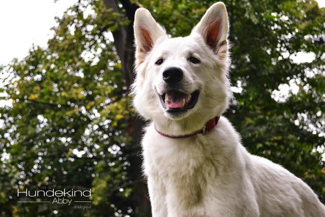 DSC_0658-1 %Hundeblog