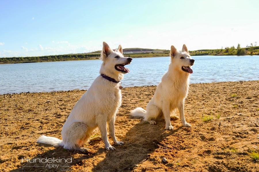 DSC_0684-1 %Hundeblog