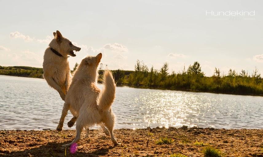 DSC_0710-1 %Hundeblog