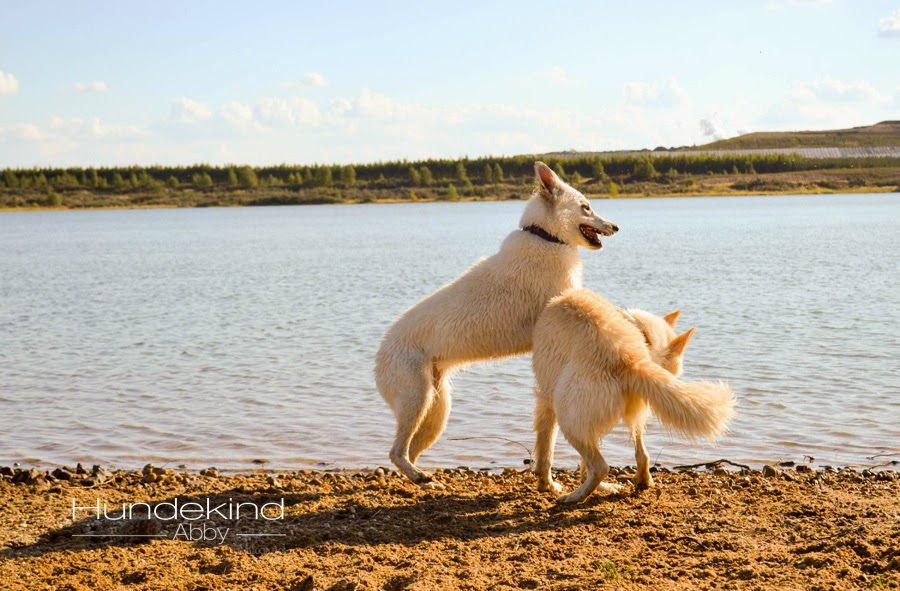 DSC_0720-1 %Hundeblog