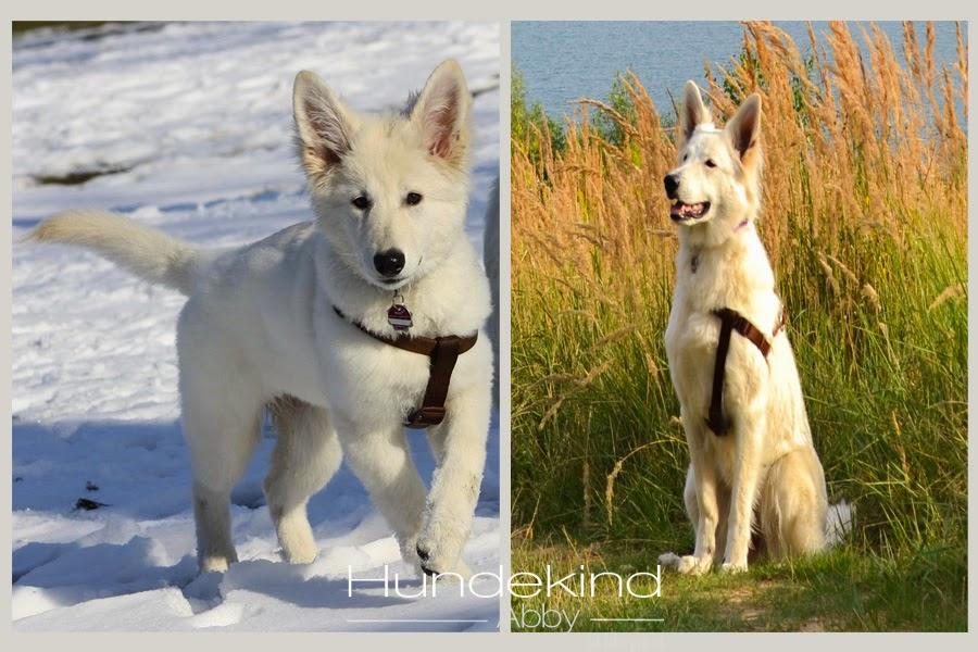 rauswachsen-1 %Hundeblog