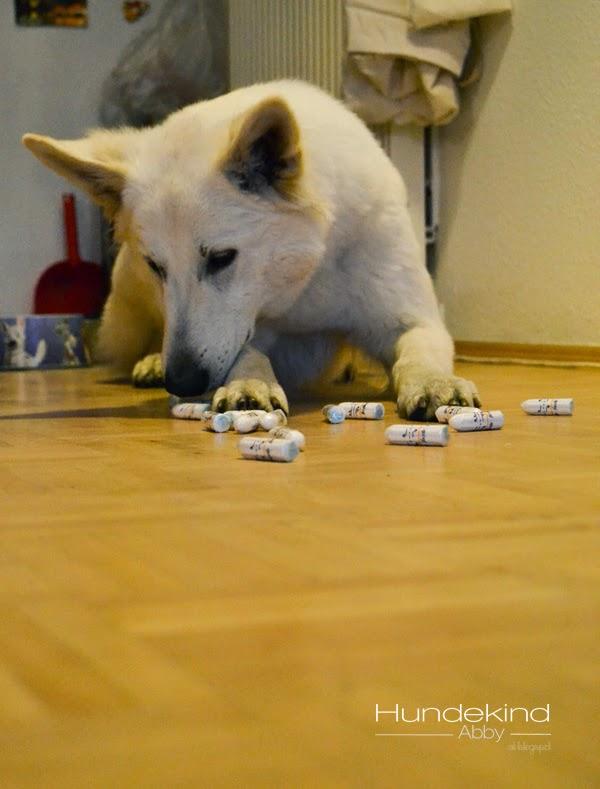 DSC_0783-1 %Hundeblog