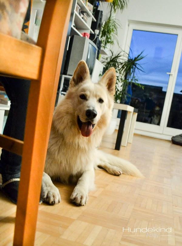 DSC_0549-1 %Hundeblog