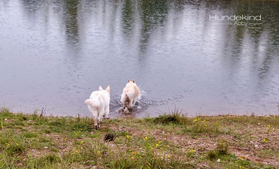 aDSC_0439-1 %Hundeblog
