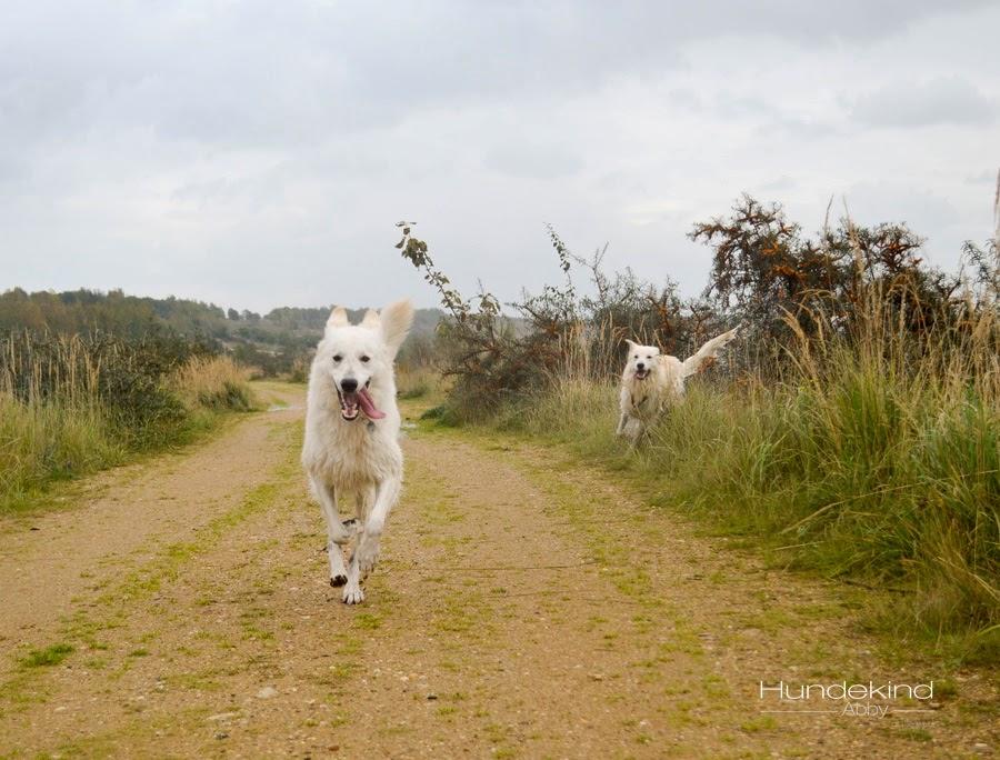 aDSC_0461-1 %Hundeblog