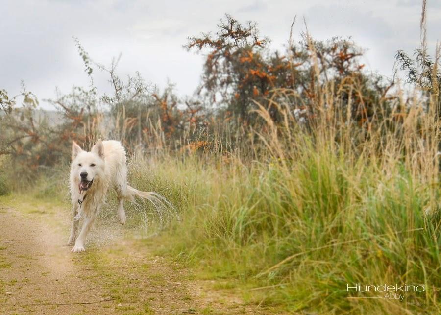 aDSC_0462-1 %Hundeblog
