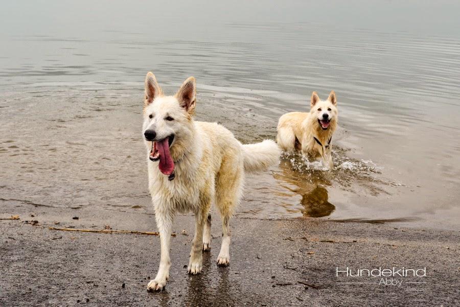 aDSC_0467-1 %Hundeblog