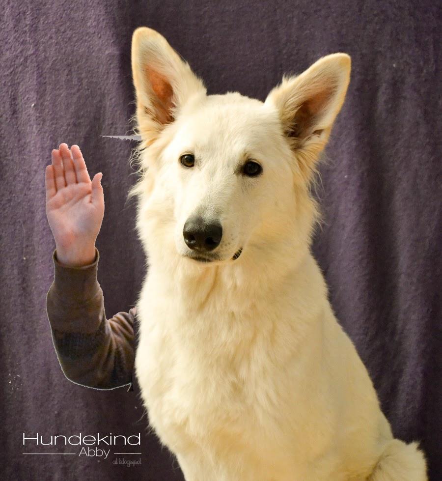 wettbewerb-1 %Hundeblog