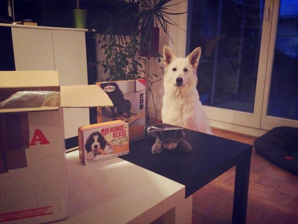 Tuer2-2 %Hundeblog
