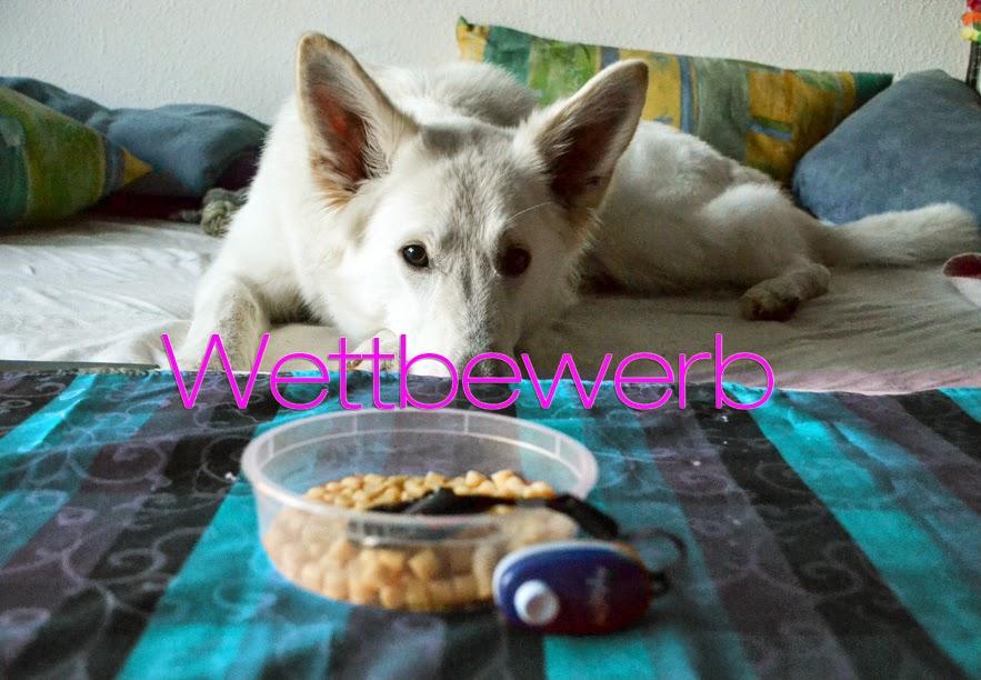 Blog_Cover-1 %Hundeblog