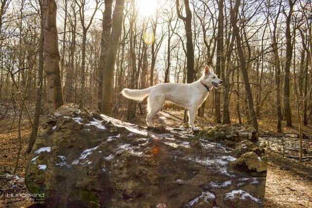DSC_0163-1 %Hundeblog