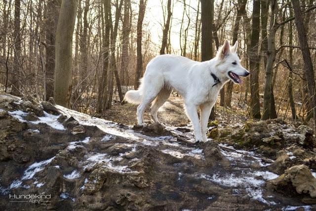 DSC_0168-1 %Hundeblog