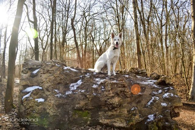 DSC_0170-1 %Hundeblog