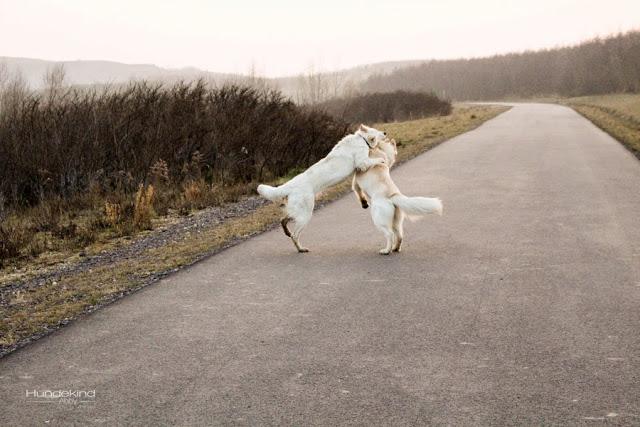 IMG_1046-1 %Hundeblog