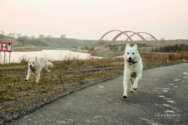 IMG_1056-1 %Hundeblog