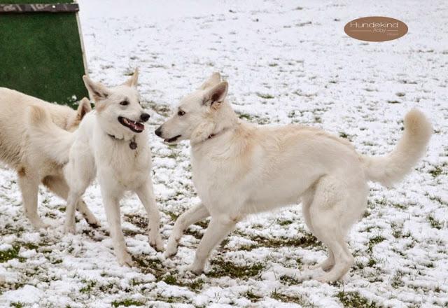 Welpentreffen2015_1-1 %Hundeblog