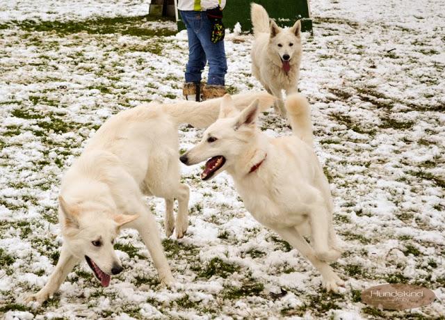 Welpentreffen2015_2-1 %Hundeblog