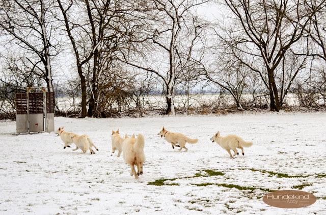 Welpentreffen2015_3-1 %Hundeblog