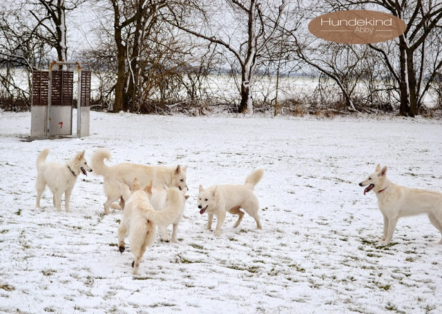 Welpentreffen2015_4-1 %Hundeblog