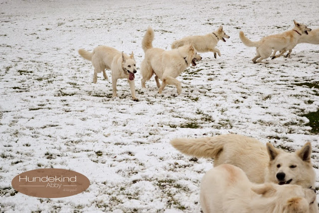 Welpentreffen2015_5-1 %Hundeblog