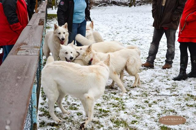 Welpentreffen2015_7-1 %Hundeblog