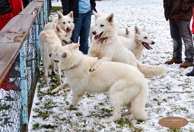 Welpentreffen2015_8-1 %Hundeblog