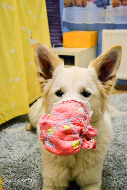 DSC_0071-1-1 %Hundeblog