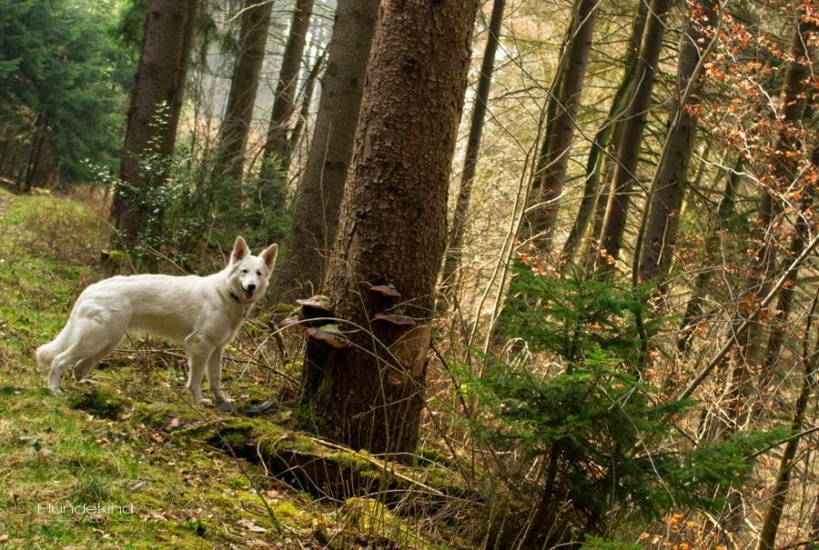 DSC_0103-1-1 %Hundeblog