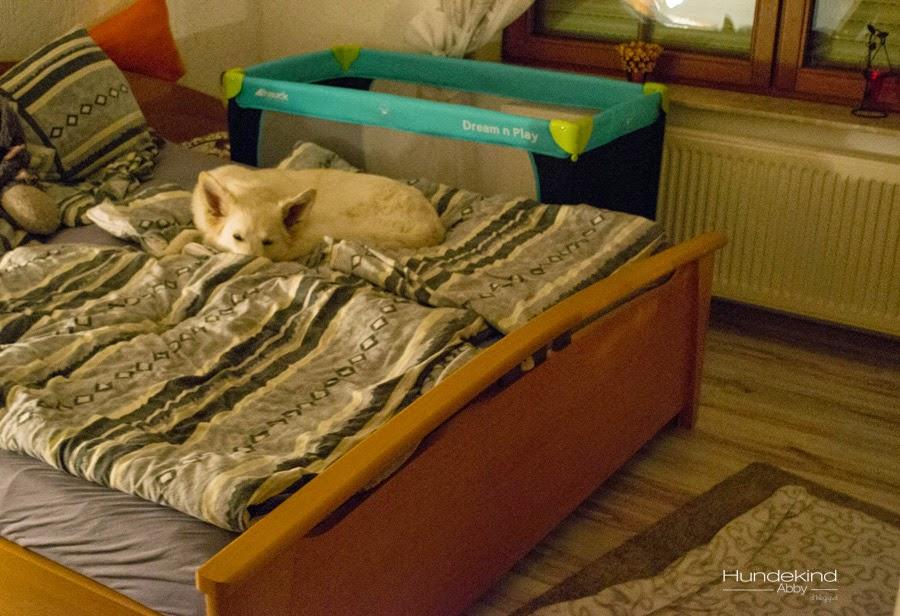DSC_0205-1-1 %Hundeblog