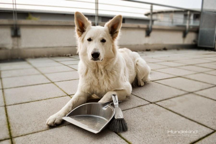 Swiffer-1 %Hundeblog