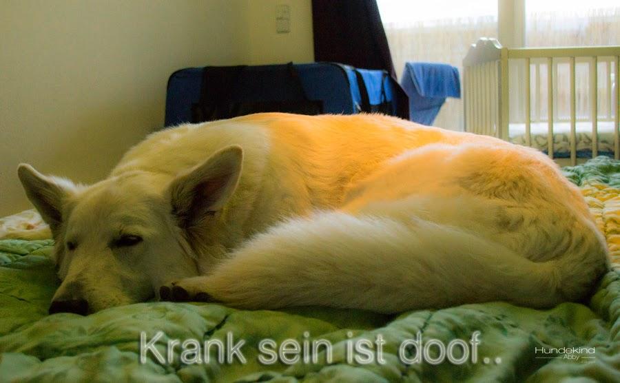 DSC_0102-2-1 %Hundeblog