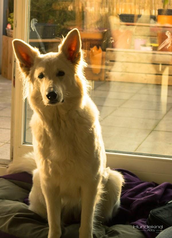 DSC_0129-2-1 %Hundeblog
