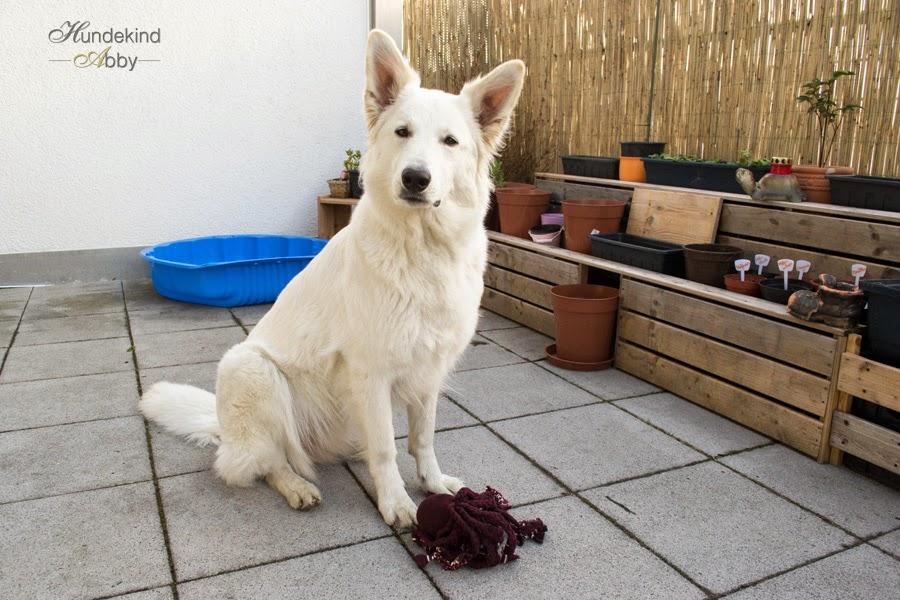 DSC_0142-1 %Hundeblog