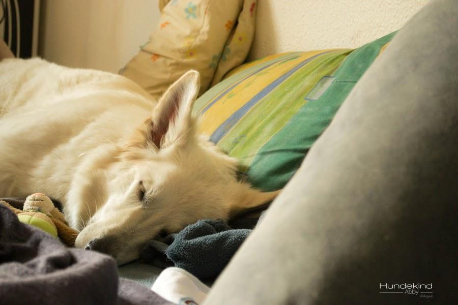Gassi_Coach2-1 %Hundeblog