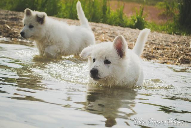 DSC_0056-1 %Hundeblog