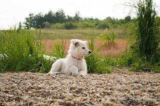 DSC_0181-1 %Hundeblog