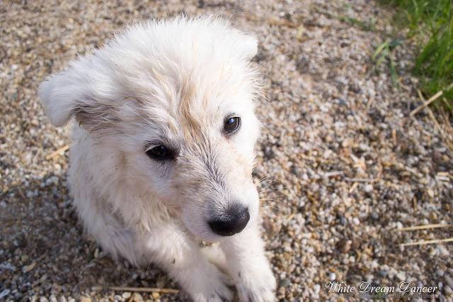 DSC_0219-1 %Hundeblog